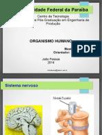 Organismo humano - Wilza