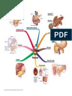 Trastorn Os Del Pancreas