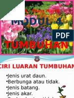 ciriluarantumbuhan-130204211700-phpapp02.pptx