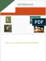 Aves e Mamiferos (1)