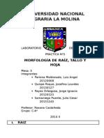 Morfologia de Raiz Tallo y Hoja