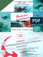 Animaux Aquatiques Dangereux