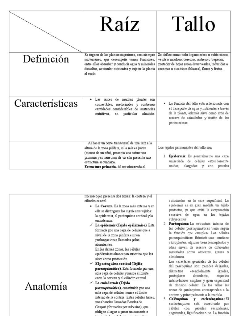 Único Anatomía Imágenes Brutas Elaboración - Anatomía de Las ...