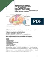 Ficha de Trabalho de Grupo 3 - O Cérebro