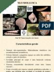 Aula Mollusca Tania 2011b Parte 1