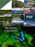 RECURSOS+FORESTALES