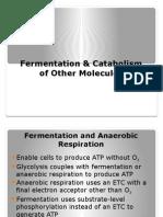 Fermentation & Catabolism of Other Molecules