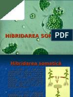 Hibridarea Somatica