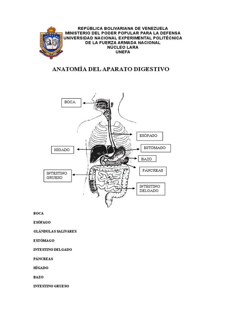 GUIA 9 Anatomia Digestivo