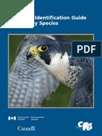 Falconry Guide - Public Edition (Sm)