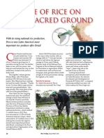 Rice Today Vol. 14, No. 1 the Rise of Rice on Peru's Sacred Ground