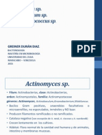 Actinomyces Sp