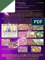 gestational diabetes mellitus - Eaps 2014