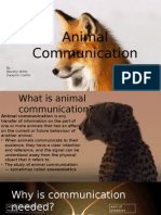 Final Presentation on Animal Communication
