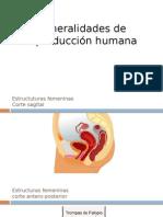 Generalidades de Reproducción Humana 2014 Oct