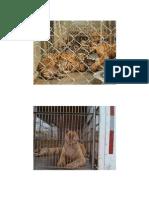 Animales en Peligro de Extfginción Alan Secundaria