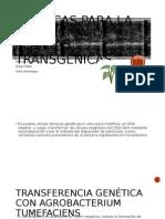 Plantas Transgenicas.pptx