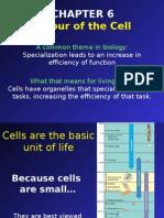 89599fb41c956183e5c8363da9077815_chapter6-cells-2-.pptx