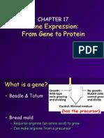 cbdda1214c931b10c2cf164aacae003d_17-gene.to.protein.ppt