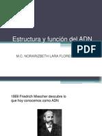 DNA, RNA, Replicación, Transcripción y Traducción (1)