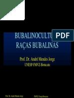 02-RACAS bulbalinas.pdf