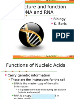 the structure and function of dna and rna