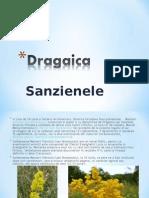 Dragaica&Sanziene.ppt