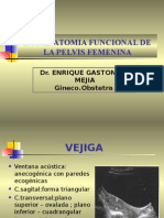 1B.-ANATOMIA PELVICA-CLASE.ppt