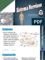 Sistema Nervioso del Ser Humano