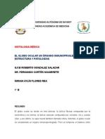 El Globo Ocular Un Órgano Inmunoprivilegiado, Estructura y Patologías
