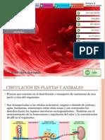 Circulacion en Plantas y Animales (1)