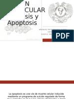 LESION MOLECULAR Necrosis Apoptosis