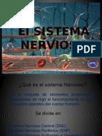 Sistema Nervioso Equipo 3 Original1