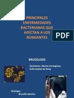 Enfermedades-Bacterianas-Bovinas