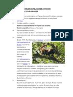 Animales en Peligro de Extinción - Detallado