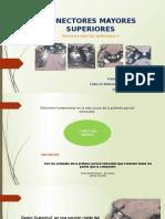Conectores Mayores Superiores