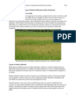 The Impact of Rodent Outbreaks on Rice Production. Academia-libre