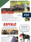 African Buffalo information sheet/posters.pdf
