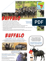 African Buffalo information sheet/posters.pdf