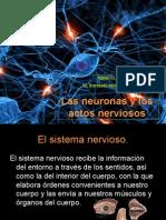 2 Las Neuronas y Los Actos Nerviosos (1)