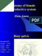 anatomi female productive