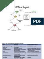 L15DNARepairF2014