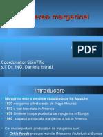 Obtinerea Margarinei.pdf