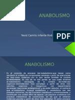 Presentación Del Anabolismo