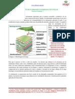 Absorcion de Nutrientes en Fertilizacion Foliar
