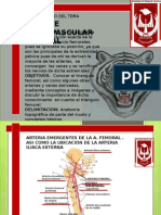 Presentacion Del Paquete Neurovascular Femoral, Ligadura y Anastomosis Quirurgica