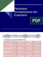 Perbedaan Archaebacteria Dan Eubacteria