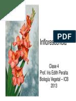 clase-04-inflorescencia.pdf