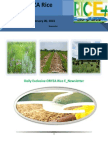 6th February,2015 Daily Exclusive ORYZA Rice E_Newsletter by Riceplus Magazine