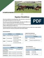 dentition handout